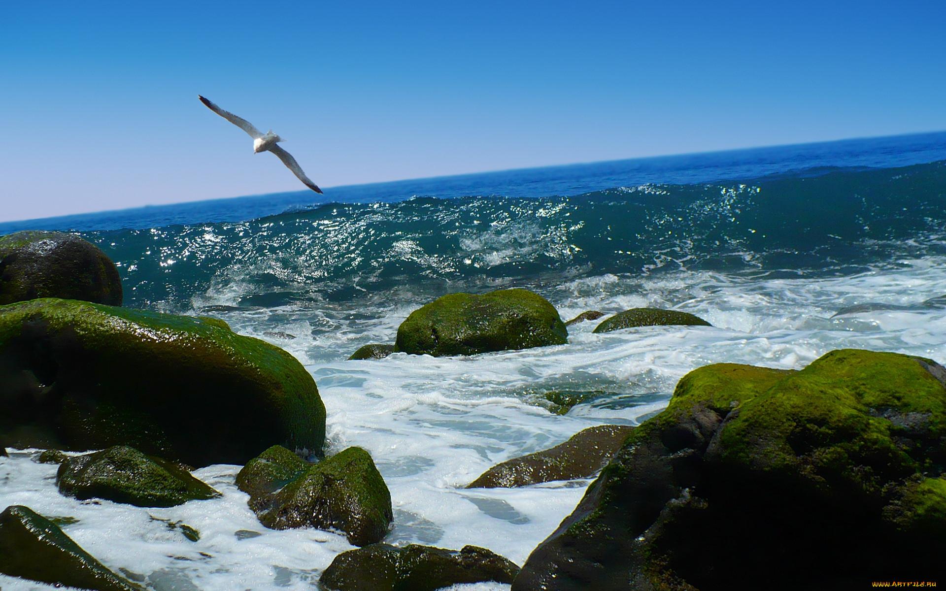 позволяет площадь картинки с птицами на природе с морем точка